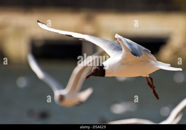 Bird flight blur stock photos bird flight blur stock for Apache mexican cuisine galveston