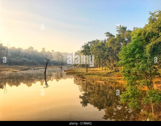 Early morning in woods near a river bank with golden light and reflections in water - Stock Image