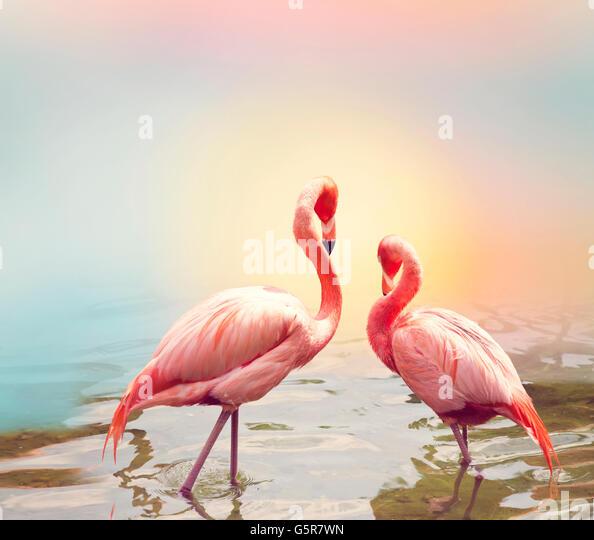 Two Pink Flamingos near water - Stock-Bilder
