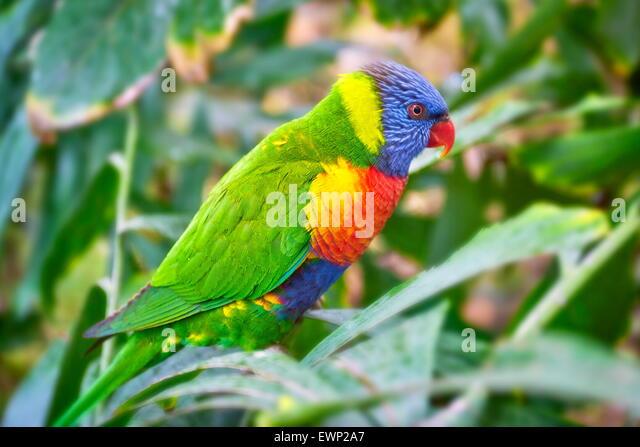 Parrot in Loro Parque, Puerto de la Cruz, Tenerife, Canary Islands, Spain - Stock Image