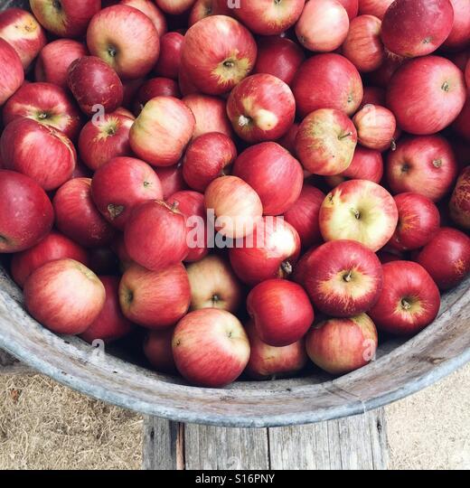 bucket of apples - Stock-Bilder