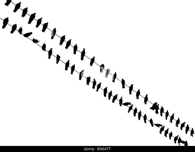 Birds sitting on wires (isolated on white, high resolution) - Stock Image