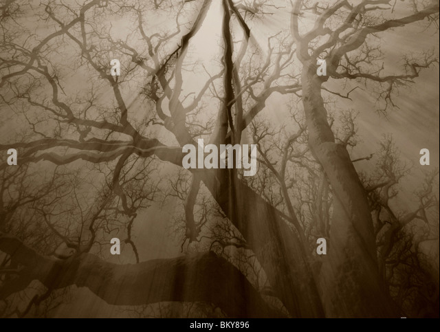 Abstracted oak forest in Rygge Norway - Stock Image