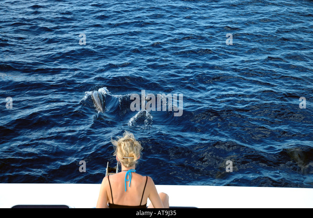 Dominica woman watches Spinner Dolphin in front of boat whale watching caribbean wildlife republic of dominica - Stock Image