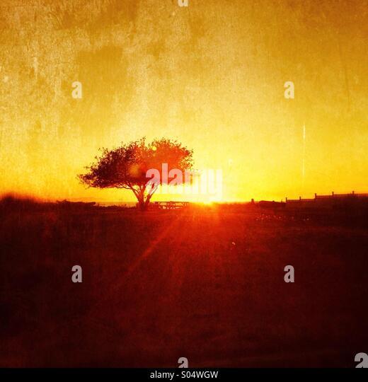 Solo Tree - Stock Image
