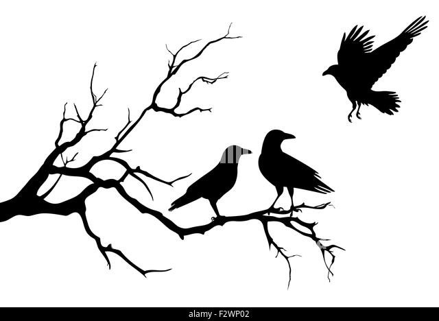 Silhouette Of Flying Crow Stock Photos & Silhouette Of ...