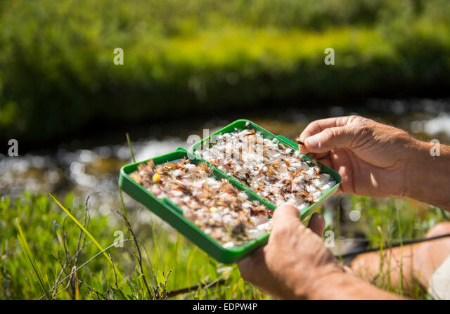 Fisherman selecting the right fly. - Stock Image