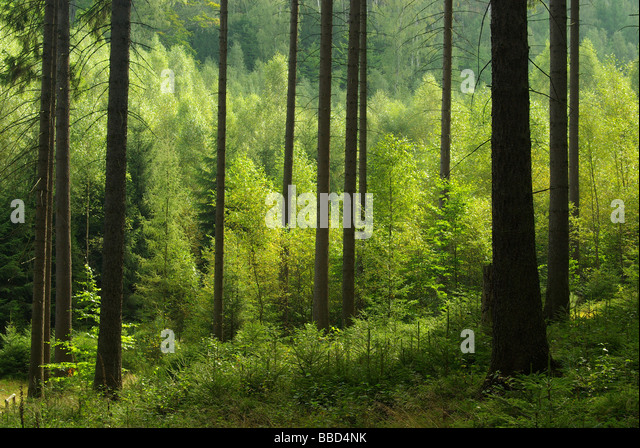 Wald forest 41 - Stock-Bilder