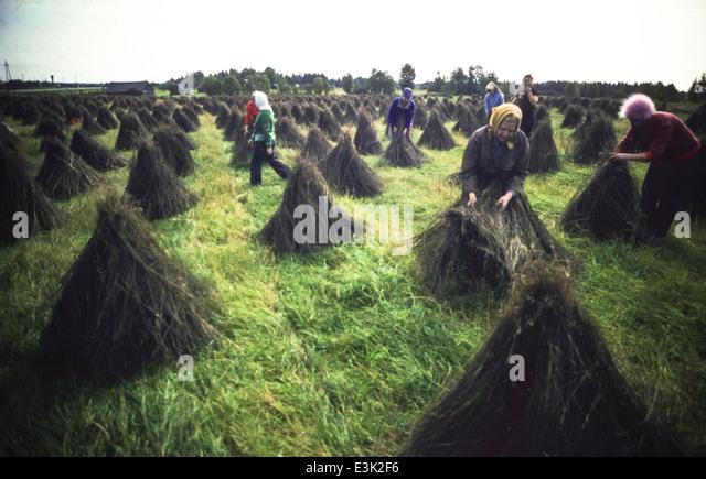 ussr,siberia,kalinin,flax picking - Stock Image