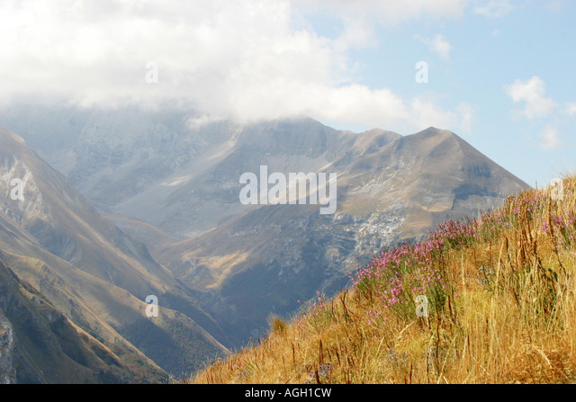 Sibillini mountain range,part of the Apennines viewed over wild flowers and golden grasses. - Stock Image