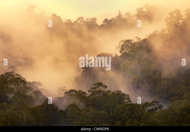 Rainforest at dawn, Maliau Basin, Sabah, Borneo, Malaysia. May. - Stock-Bilder