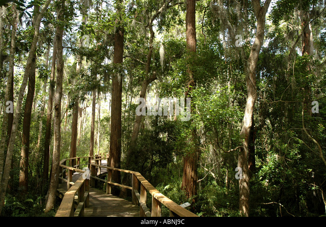 Tarpon Springs Florida Westin Innisbrook Resort Nature Trail through Cypress Swamp - Stock Image