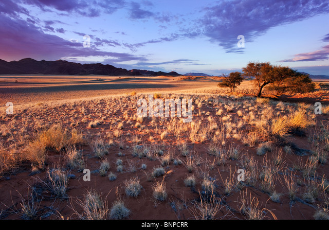 Setting sun lights up unique scenery of south-west Namib desert or pro-Namib. NamibRand Nature Reserve, Namibia - Stock Image