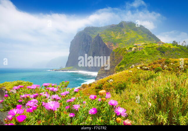 Madeira - landscape with flowers and cliff coastline near Ponta Delgada, Madeira Island, Portugal - Stock Image