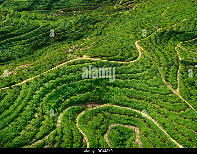 An aerial view of a young palm tree plantation. - Stock-Bilder