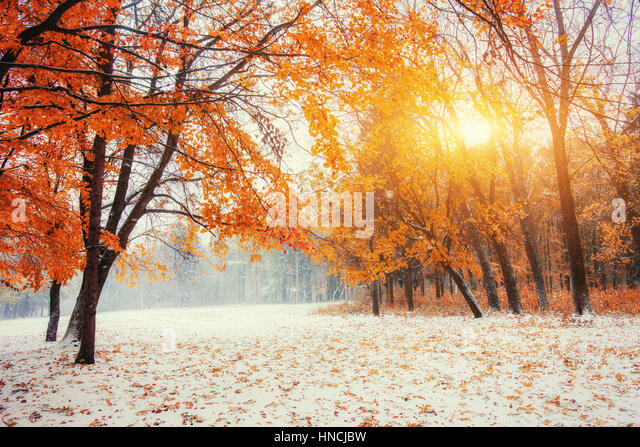 October mountain beech forest with first winter snow  - Stock Image
