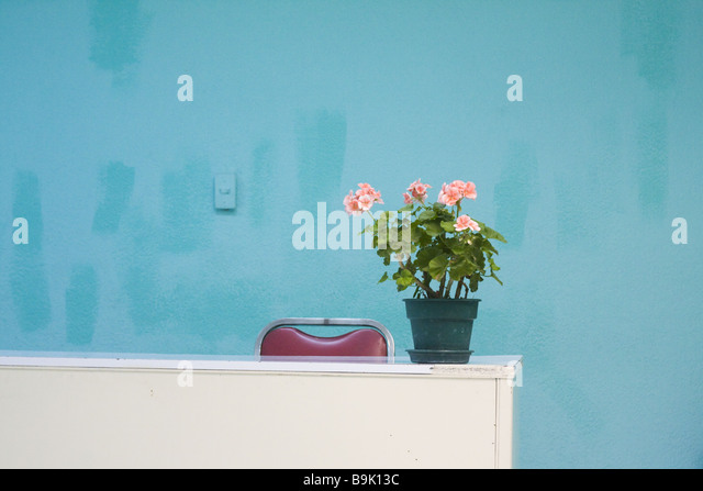 Potted flowers on a desk in an empty office in Mexico City, Mexico. - Stock Image