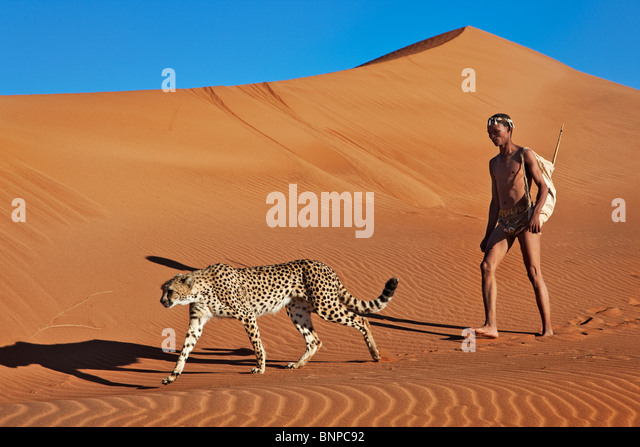 San hunter armed with traditional bow and arrow with cheetah - Stock Image