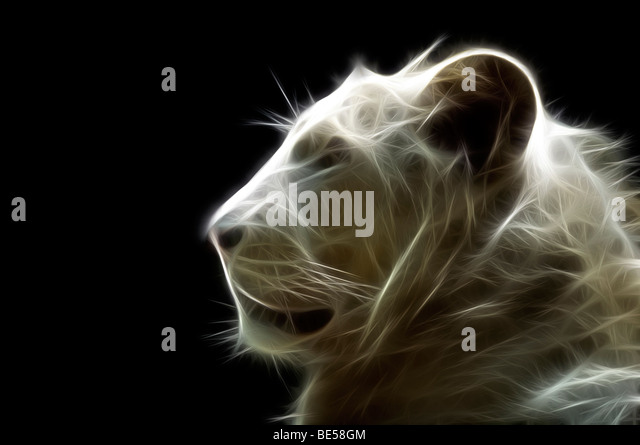 A digitally illustrated head of a white lion (Panthera leo). Portrait d'un lion blanc ( Dessin assisté - Stock Image