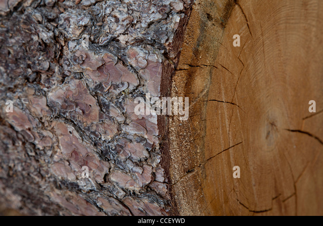Extreme close-up view of tree bark - Stock Image