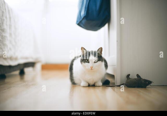 White cat staring at camera - Stock Image