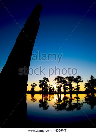 tree silhouettes at sunset in the Atchafalaya swamps, Louisiana - Stock Image