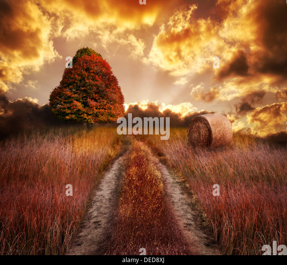 Colorful Autumn Sunset On A Field - Stock Image