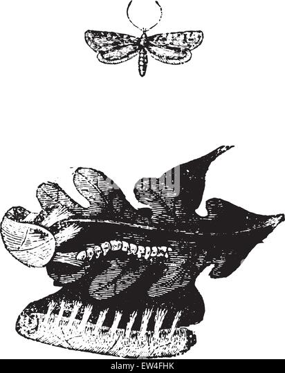 Worm Natural History Illustration