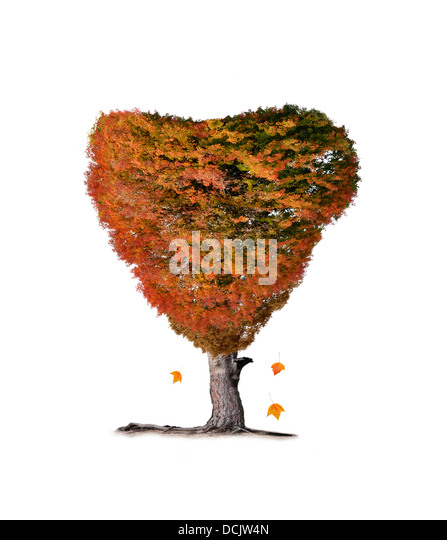 Colorful Fall Tree On White Background - Stock Image