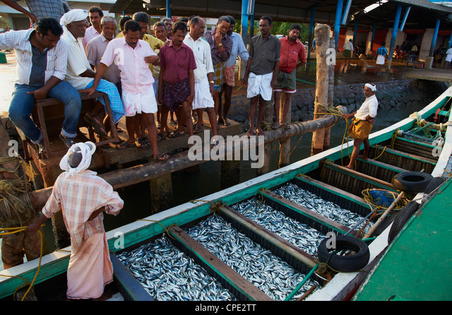 Fishermen, Fort Cochin, Kerala, India, Asia - Stock Image
