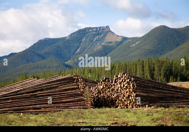 Mountains of felled trees result of logging in Livingstone valley Rocky Mountains Alberta Canada - Stock Image