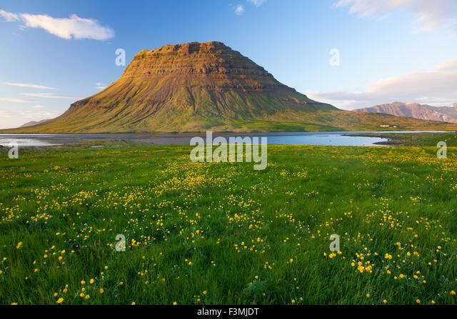 Buttercup meadow and Kirkjufell mountain, Grundarfjordur, Snaefellsnes Peninsula, Vesturland, Iceland. - Stock-Bilder