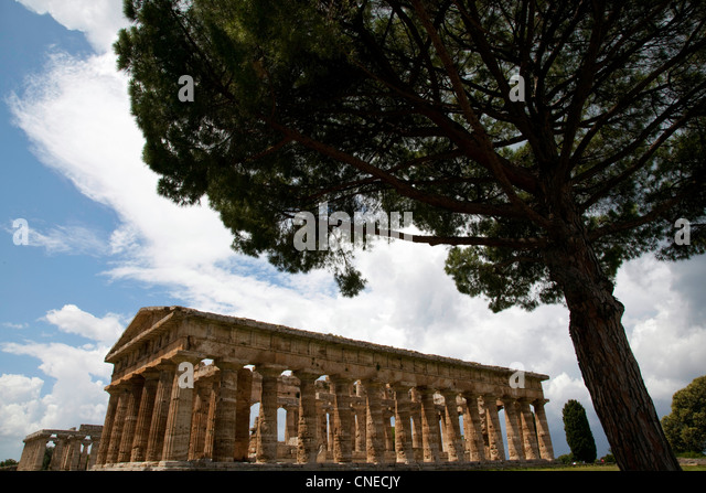 A view through the trees of the Greek ruins at Paestum, Italy. - Stock Image