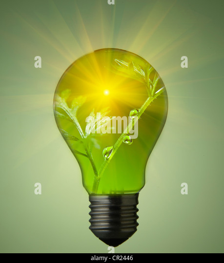 Plant growing in light bulb - Stock Image