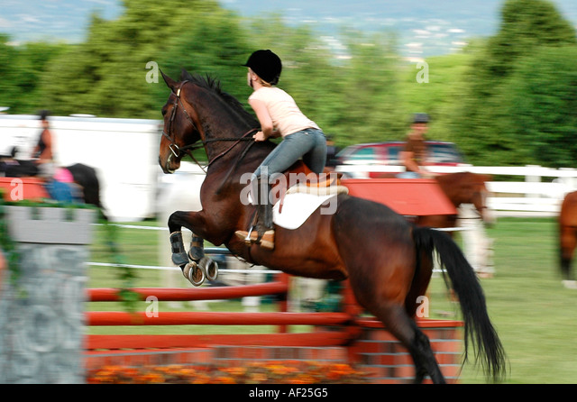 rider practices the hunting competition course in this motion blur shot from three quarter behind - Stock Image