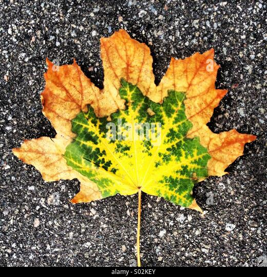 Levels of autumn - Stock Image