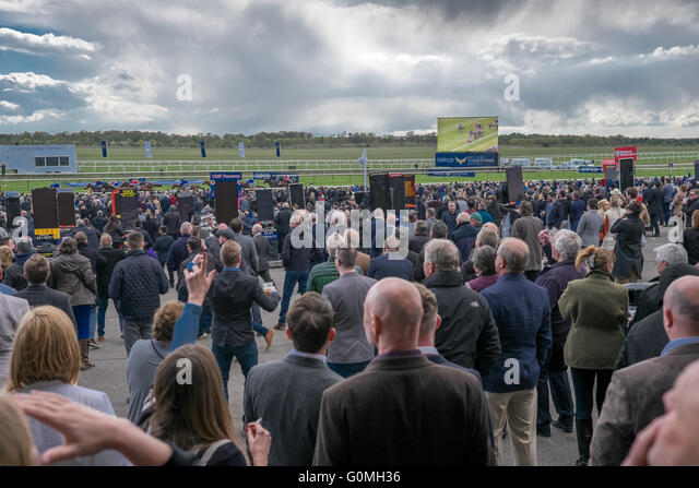 The crowd cheer cheers cheering the horses horse race at the QIPCO 2000 Guineas race.The crowd cheer cheers cheering - Stock Image