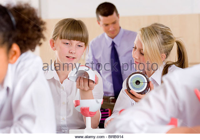 School girls working with biology model in classroom - Stock Image