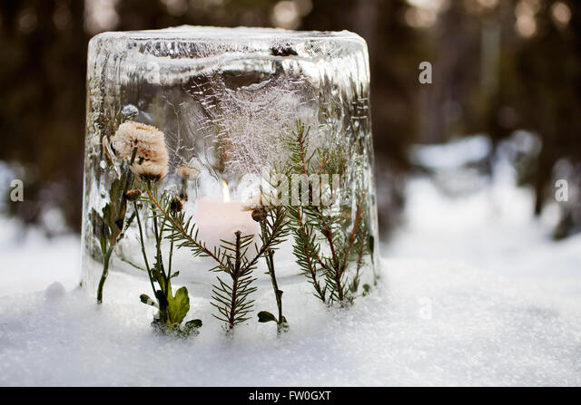Ice lantern with red frozen tulips - Stock Image