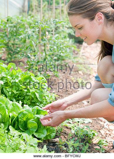 Woman handling plants in country - Stock Image