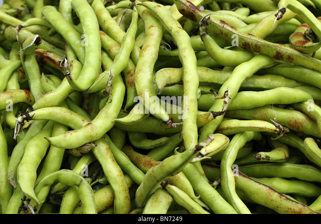 lima beans vegetables food texture pattern background - Stock Image