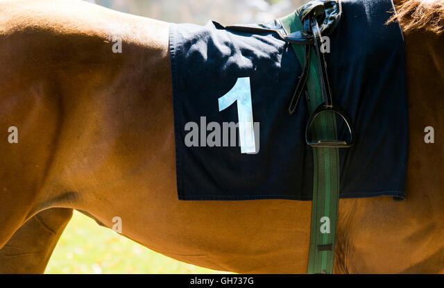 Horse racing, close up on brown horse with number 1 - Stock Image