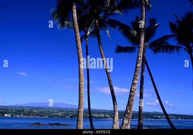 Big Island Optical Hilo Hi