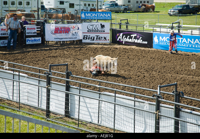 ILLINOIS Grayslake Young child try to ride sheep in arena slip off to side mutton busting Lake County Fair ewe - Stock Image