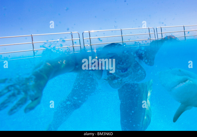 Shark attack - Stock Image