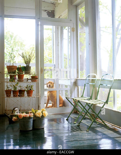 screened porch with dog waiting by door - Stock Image