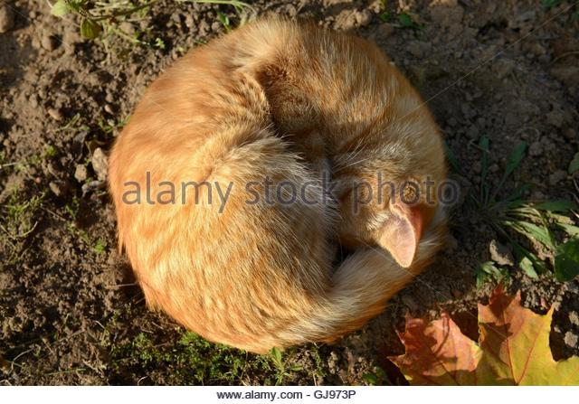 Ginger cat like the gentle autumn sun. - Stock Image