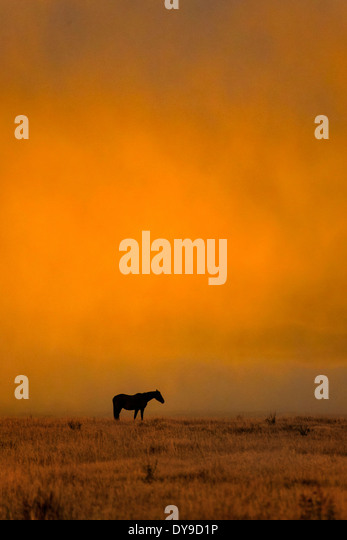 Horse, horses, Grand Teton, National Park, Wyoming, USA, United States, America, free, animal, landscape, prairie, - Stock Image