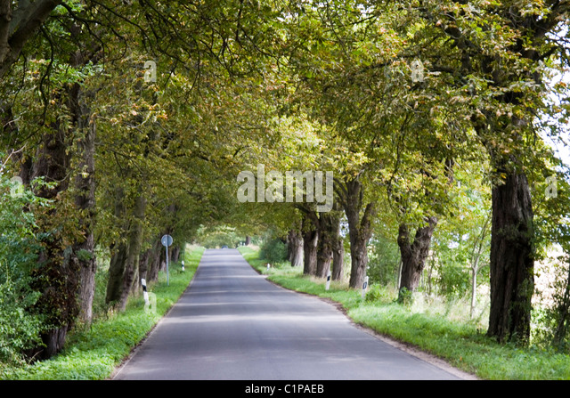 Germany, Rugen, treelined road - Stock Image