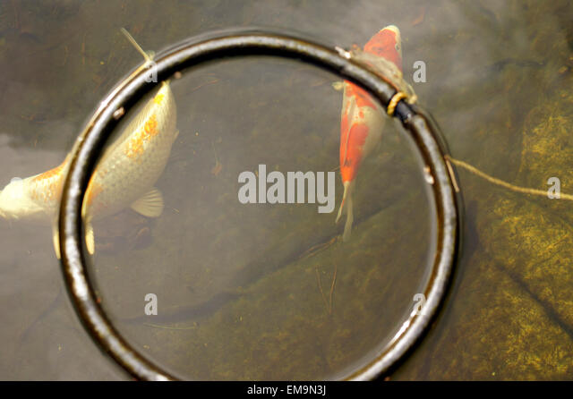 Court of the fish pond stock photos court of the fish for Fish feeding ring